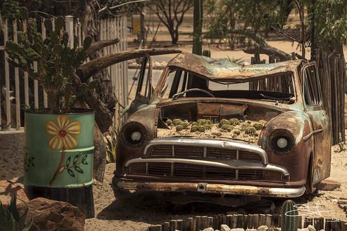 Coche y Cactus