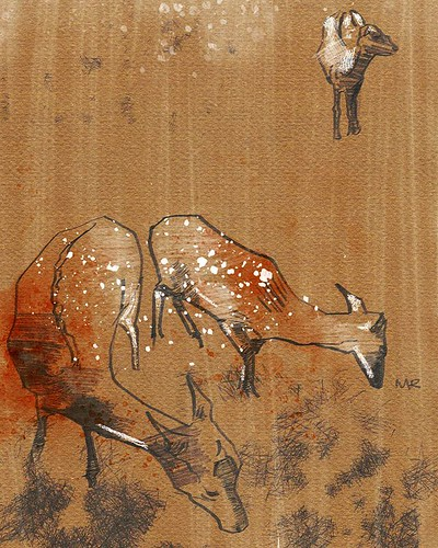 Oh, deer. #deer #animalart #wildlife #woodland #britishwildlifecentre #animalillustrator #illustration #drawing #draw #sketch #sketchbook #digitalart #michaelprea