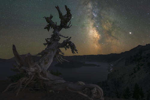 Ancient Whitebark Pine Under The Stars