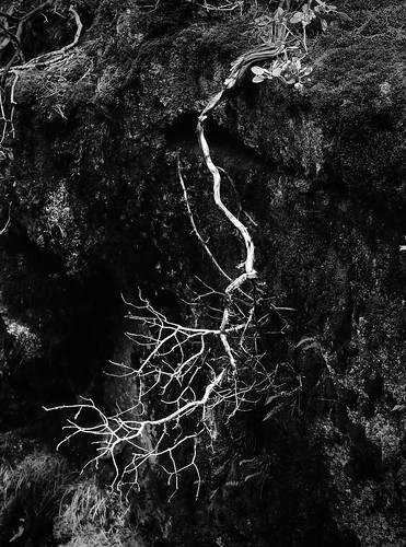 Dead Tree, Rogue River Gorge, Oregon, 07-05-19