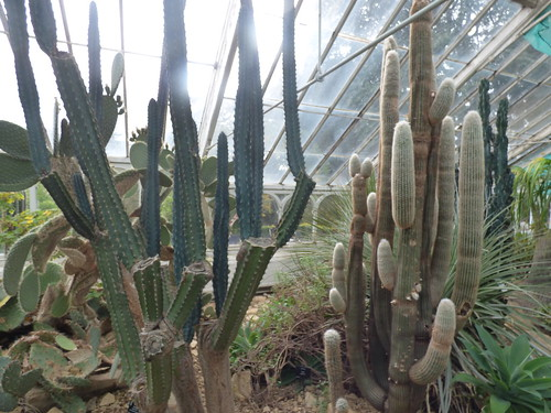 Birmingham Botanical Gardens: Heritage Open Day for Birmingham Heritage Week - Arid House - cactuses