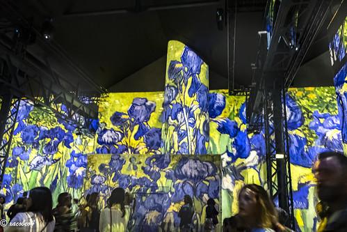 "Irises""The lightning conductor for my illness""V.  Van Gogh"