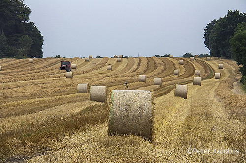 Ernte / harvest Schleswig-Holstein, Germany