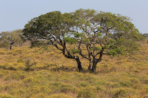 South Africa - iSimangaliso Wetland Park