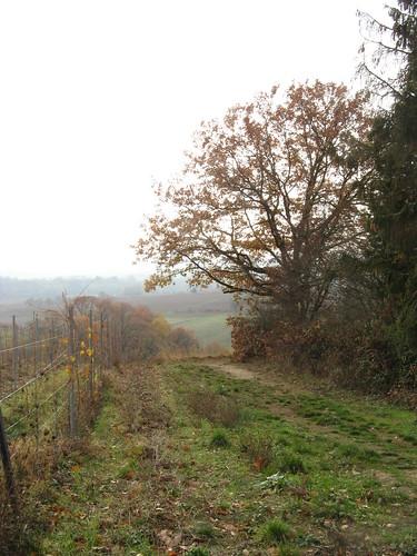 Herbst ist es jetzt, von Blättern leer die Bäume