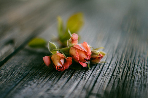 Three rose buds