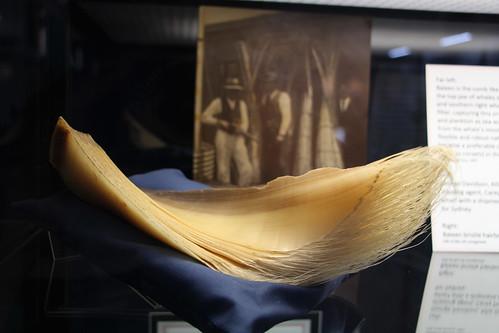 Baleen Hair