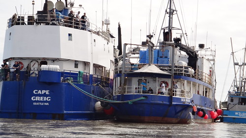 a processor, a support ship and a fish tender float into a bay...