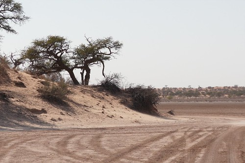 Kalahari Landschap