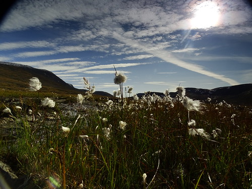 Cottongrass and the skies