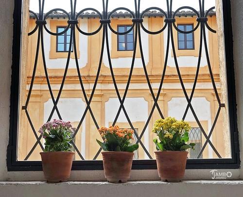 Tre vasi di fiori