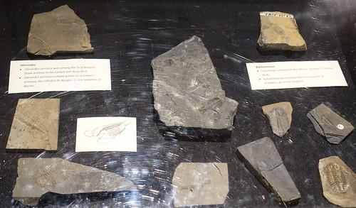Burgess Shale Fossils