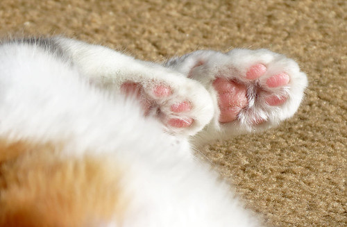 Pink kitty toes 2