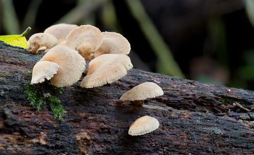 Fungi Hunt