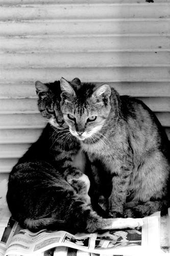 Cats por Renata Biglia.