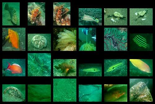 Osezaki sealife 2012/06/24