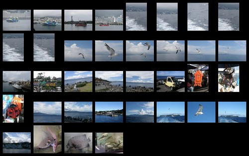 preview of coming attractions: Hatsushima sealife 2012/08/12