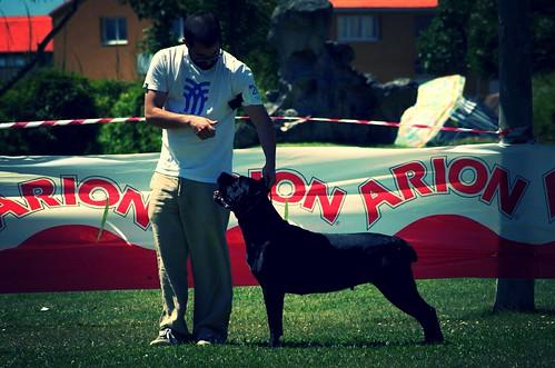 Concurso Canino Porto do Son (2)