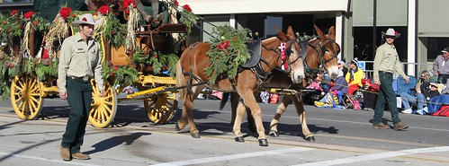 Outwalkers Help Guide Working Pack Mules in Rose Parade