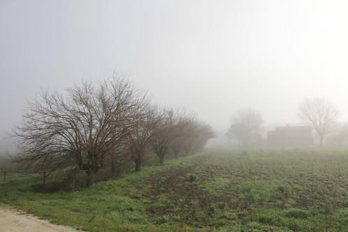 la nebbia - Casine di Ostra