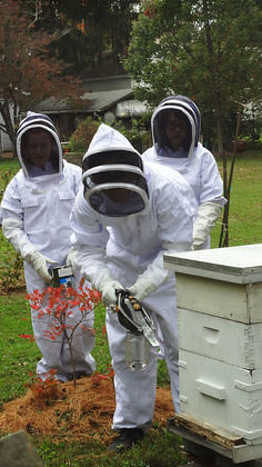 TIME beehives Jan 2015