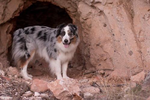 Cave Dogs