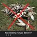 Как ловить гольца белого?