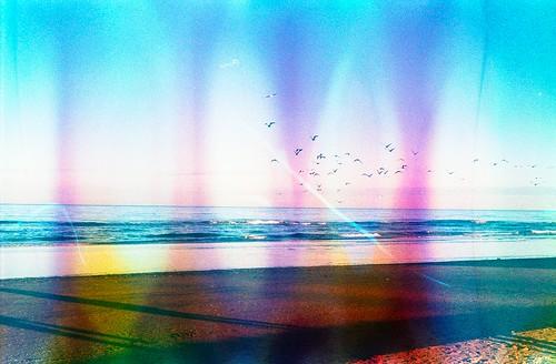 Il mio amore è un gabbiano che vola alto e basso. PS: se ci incontrassimo per caso al tramonto mi chiedo se tu mi abbracceresti.