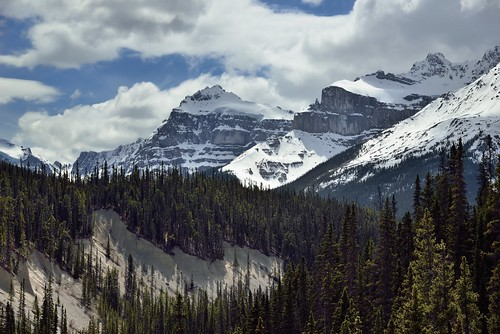 Hillside After Hillside of Evergreen Trees (Banff National Park)