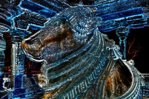 India - Karnataka -  Halebid - Hoysaleswara Temple - Nandi - 136dd