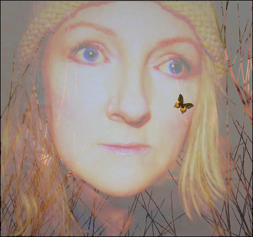 DREAM A BUTTERFLY IN A WINTER WOOD