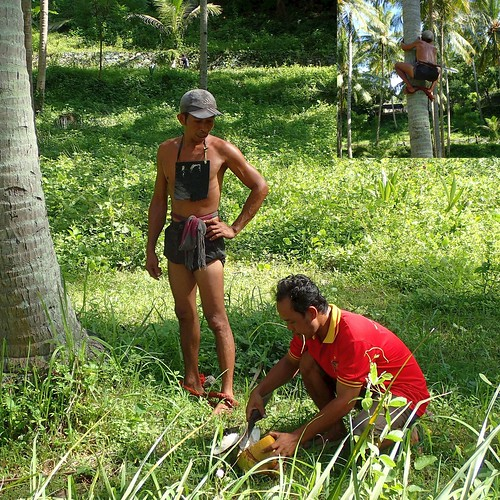 Slaking Thirst. Coconut Palm Workers, Kerandangan, Lombok, Indonesia