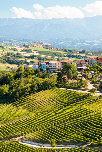 View on the Piedmont Vineyards from La Morra