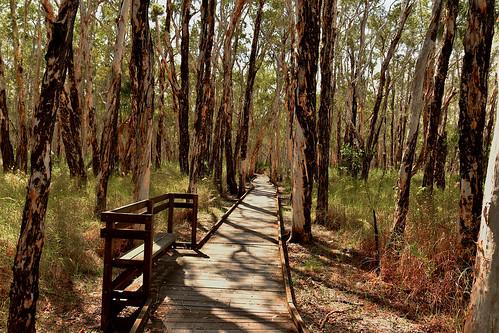Banksia walking track [Woodgate]