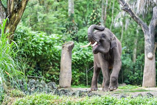 Satwa Taman Safari - 01