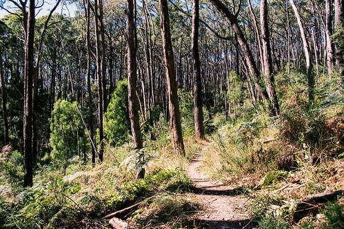 Dominion: Mount George, Australia