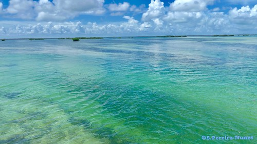 The Caribbean in Cuba - colors for all tastes, in Cayo Guillermo
