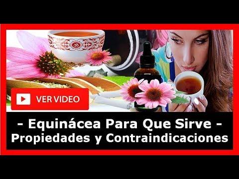 Equinacea Para Que Sirve, Equinacea Propiedades, Que Es La Equinacea, Equinacea Contraindicaciones