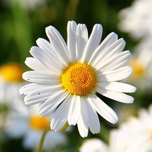 Understanding The Background Of Flowers Popular Types   flowers popular types