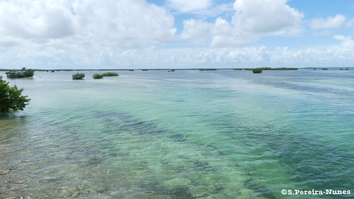 The colorful contrast of different nuances of tint at the Caribbean in Cayo Guillermo, Cuba