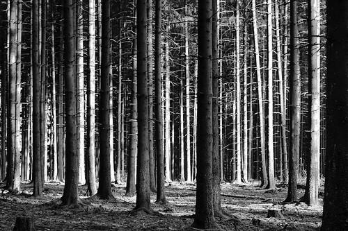 Die vielen Bäume und die wenigen Menschen- machen den Wald so schön. (Otto Weiß)