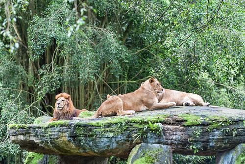 Satwa Taman Safari - 06