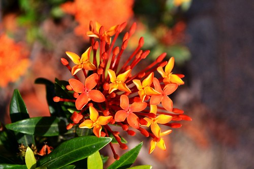 Is Common Flower Any Good? Seven Ways You Can Be Certain   common flower
