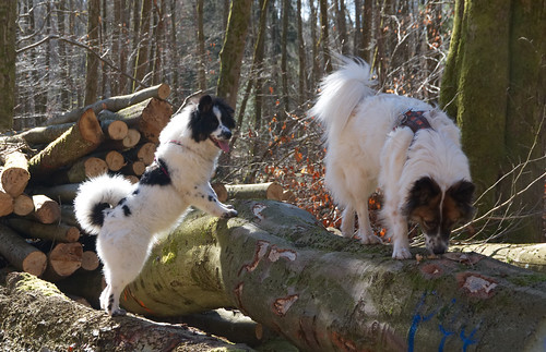 Dalina und Fanny im Wald