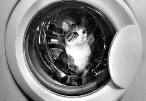 My Purr - Washing machine