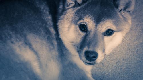 Through A Pup's Eyes