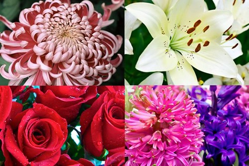 The 17 Common Stereotypes When It Comes To Each Flower Meaning   each flower meaning