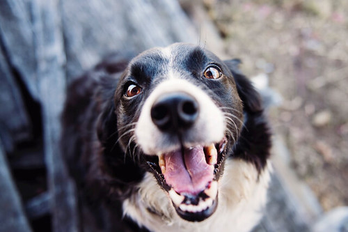 10 Best Indestructible Dog Toys For Any Dog