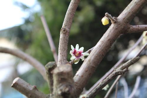 Primo assaggio di primavera