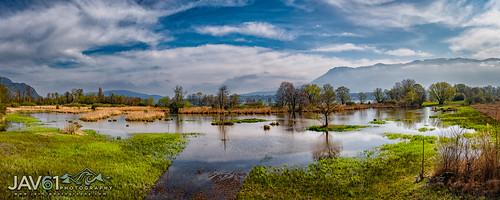 Marsh near Bourget du Lac, Savoie_1541